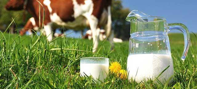 Leite de vaca ou composto lácteo?